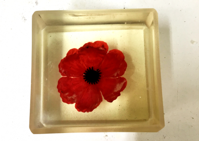 Poppy - Organic Matter Resin Embedding | Claire Tennant Workshop
